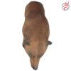 Braunbär laufend 5