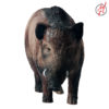 Wildschwein 3