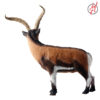 iberische Wildziege 3
